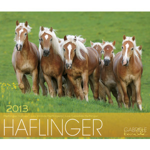Haflinger 2013