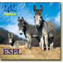 Æsel Postkortkalender 2012