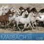 Marbach 2013